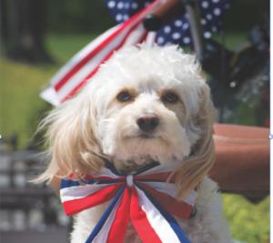 06-12 partydog