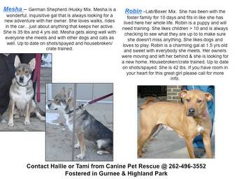 Dogs In Need Of Homes