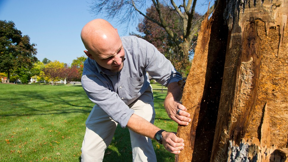 No Reprieve For Ash Trees