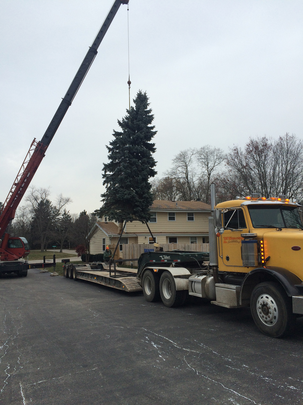 Lake Forest's holiday tree en route to its destination. Photo supplied by City Forester Peter Gordon.