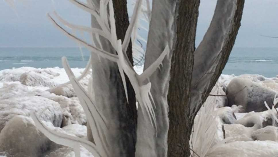 'Lalique' Michigan