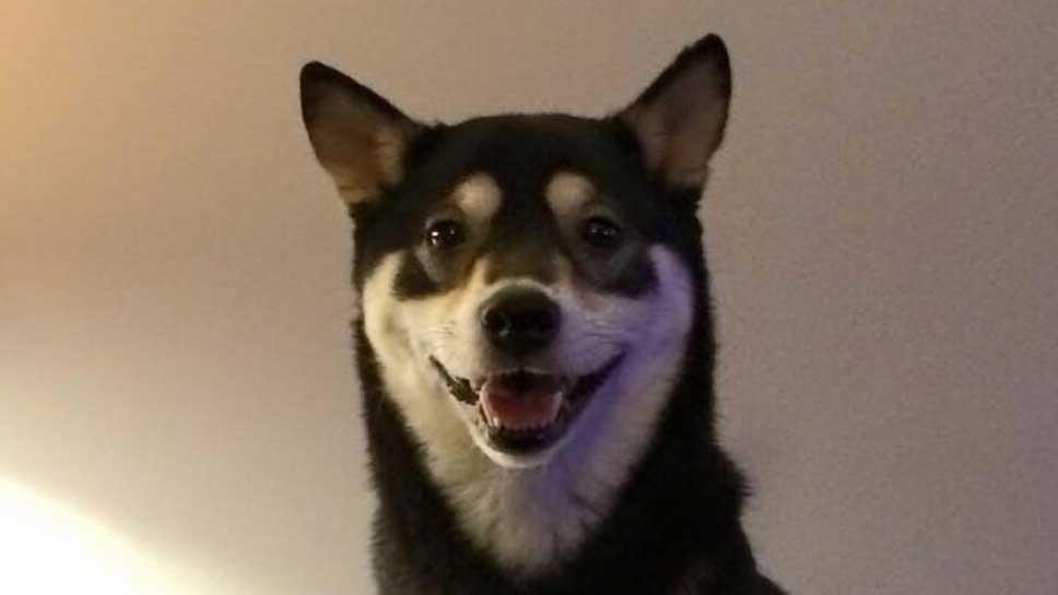 Dog Missing in Highland Park