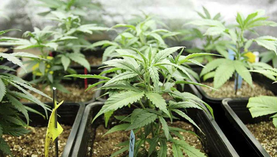 Medical Marijuana Heading to the North Shore?