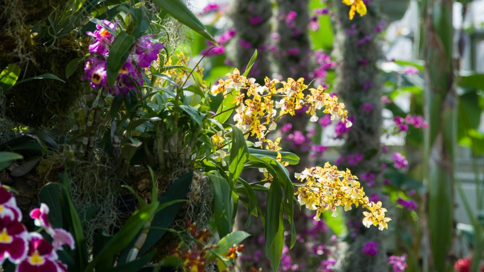 Orchid Show Adds Color To Winter