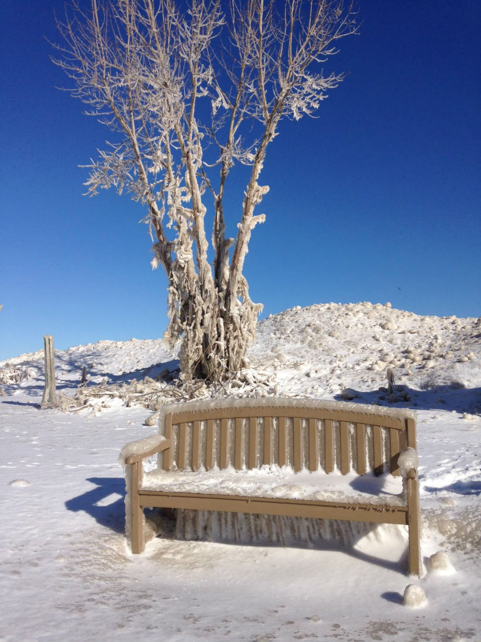 Ice encapsulates a tree at the south end of Sunrise Beach in Lake Bluff; photo by Bob Clifford