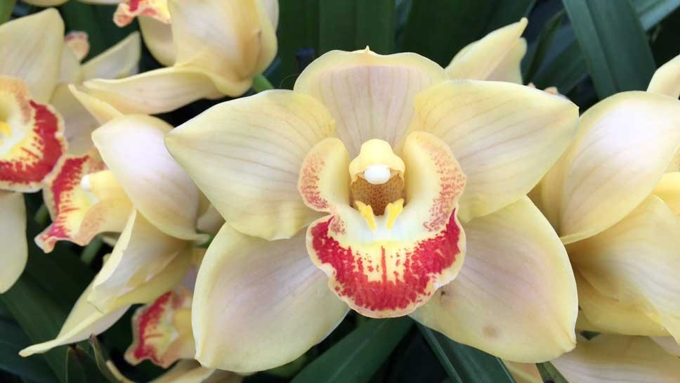 The Orchid Show will be at the Chicago Botanic Garden in Glencoe until March 15.