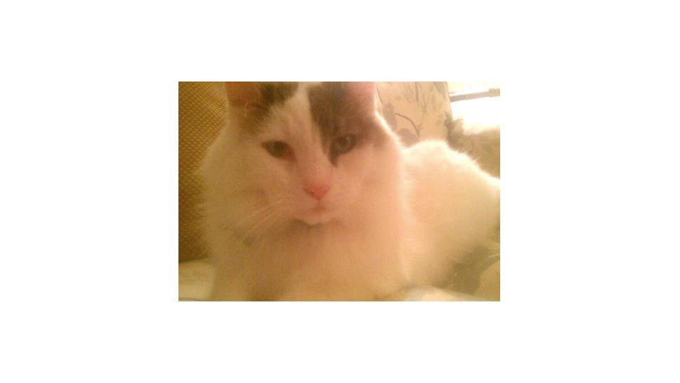 Cat Missing: Lake Bluff