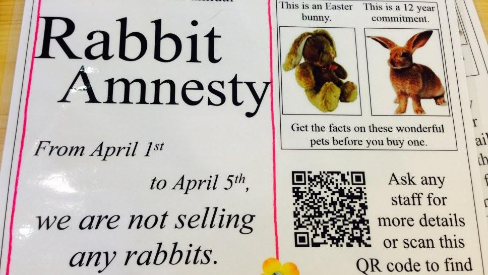 Rabbit Amnesty at Wilmette Pet Center