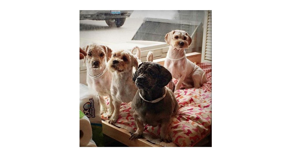 Glencoe Dogs Ready For Adoption