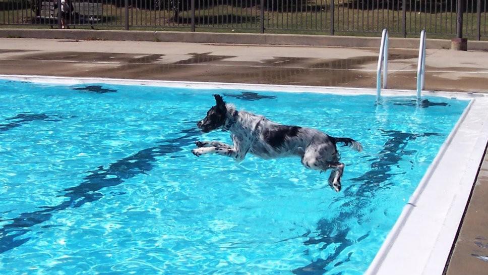 "Mitchell Pool ""Last Splash"""