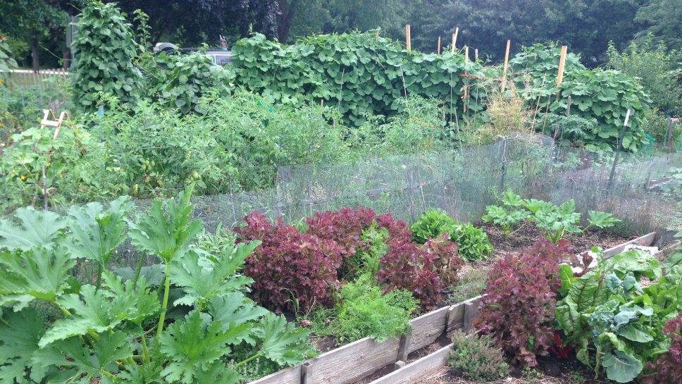 Wilmette Garden 1