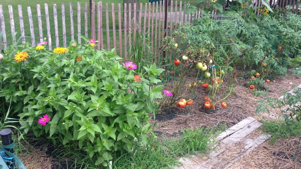 Wilmette Garden 3