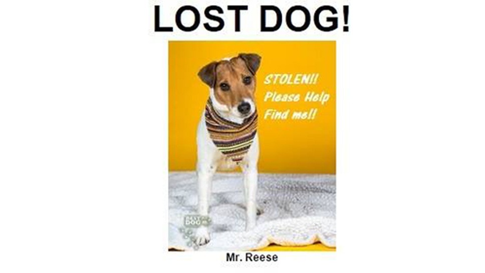 Dog Missing From Heartland Shelter