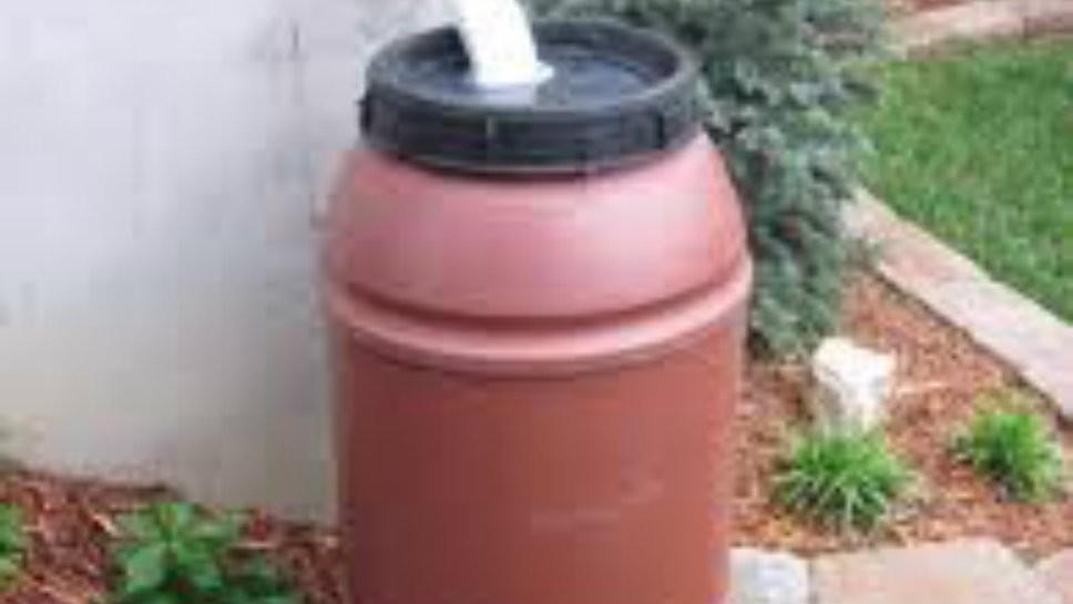 Rain Barrels Water Gardens for Free