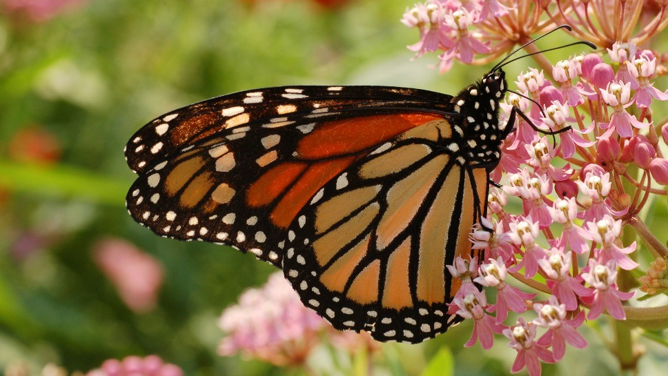 'Butterfly Project' Recognized