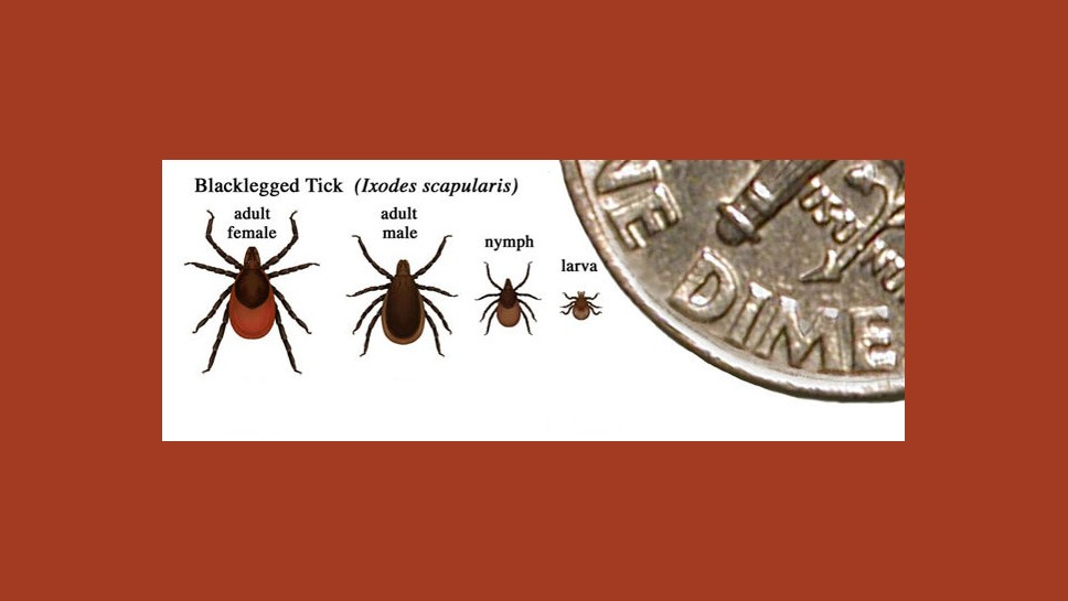 Watch Out: It's Tick Season