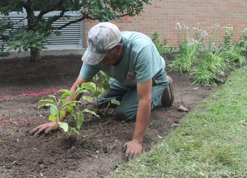 A Scott Byron & Co. volunteer works in the learning garden. Photo courtesy of North Chicago Community Partners.