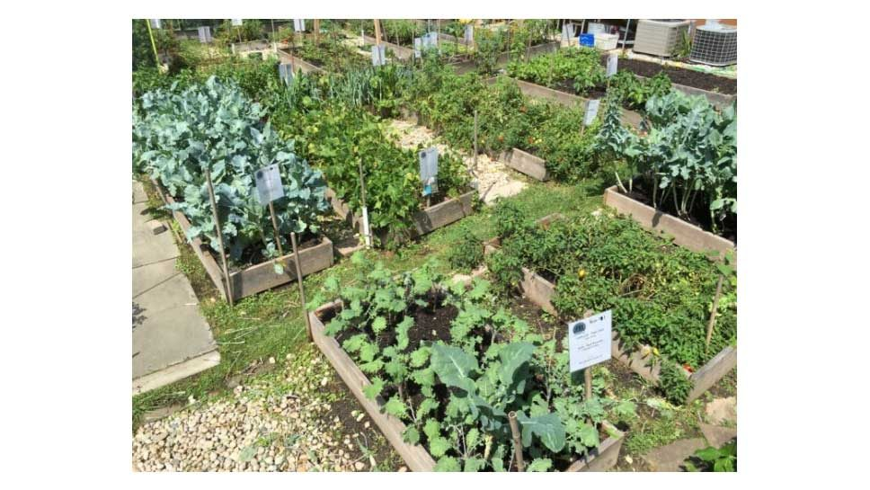 Want To Learn About Organic Gardening?
