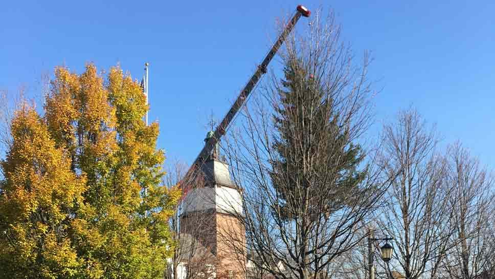 Going Up: Lake Forest Tree