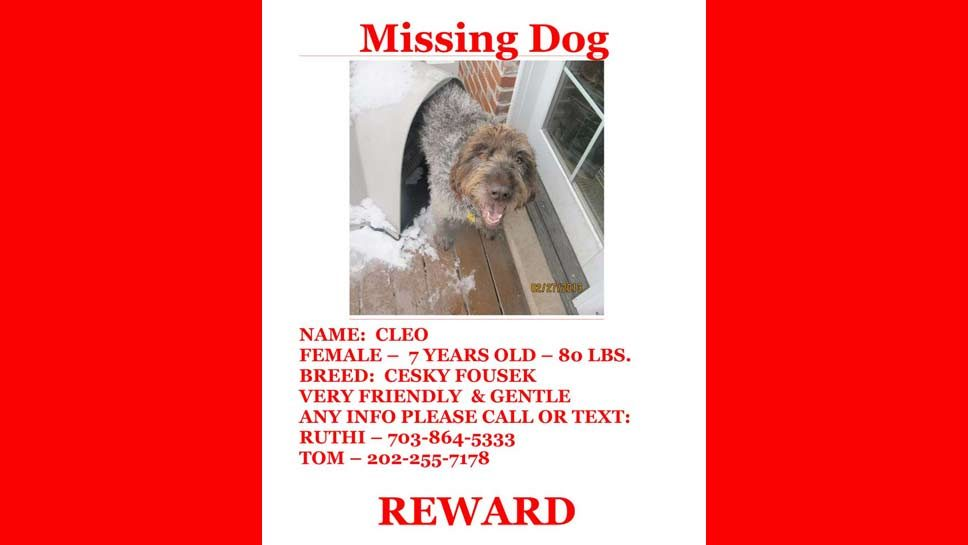 Dog Missing: Have You Seen Cleo?