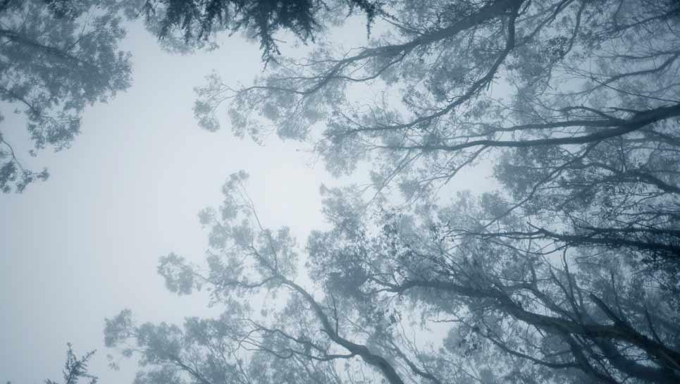 Glencoe: Tree City USA for 32 Years