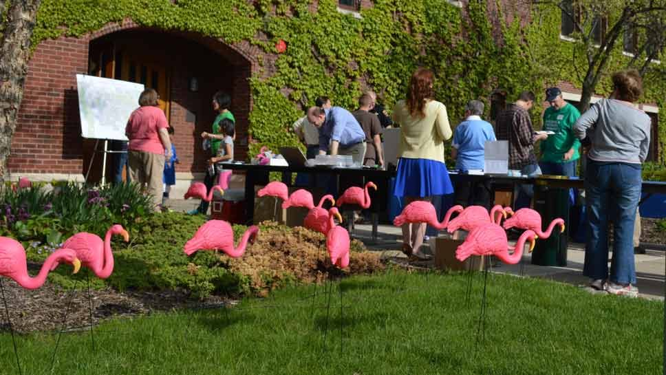 In Northbrook, Flamingos Welcome