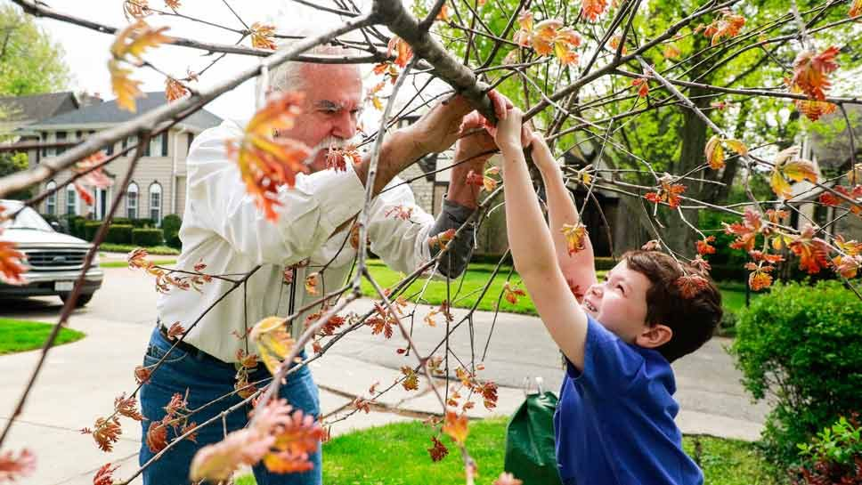 Winnetka Family Revives Native American Tree …