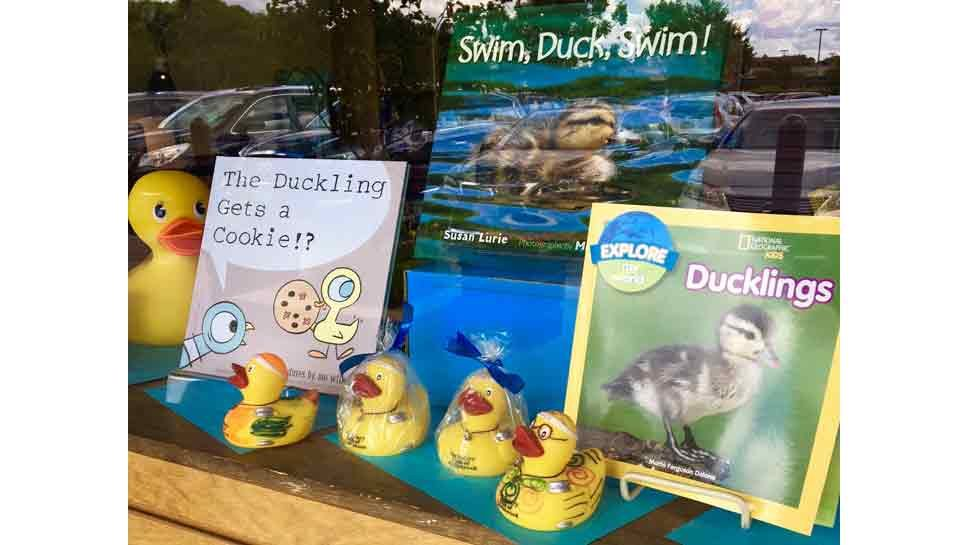 Northbrook Makes Way for Ducklings