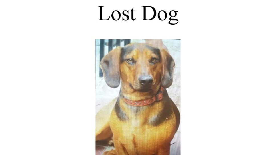 Have You Seen Walter the Dachshund?