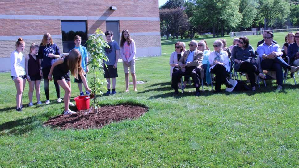 Northbrook Tree Rooted in Holocaust History