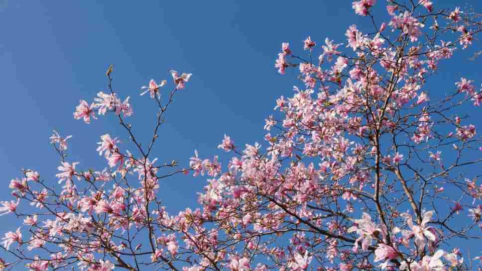 Warm Weather Brings Spring Blooms