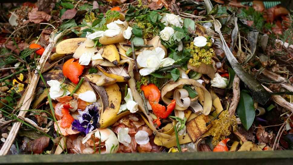 Glencoe Starts Food-Scrap Program