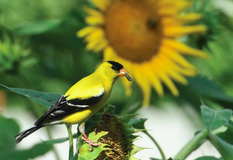 Nurturing Birds Through Autumn